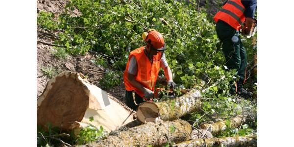 Laikas pradėti ruoštis naujam miškų tvarkymo sezonui